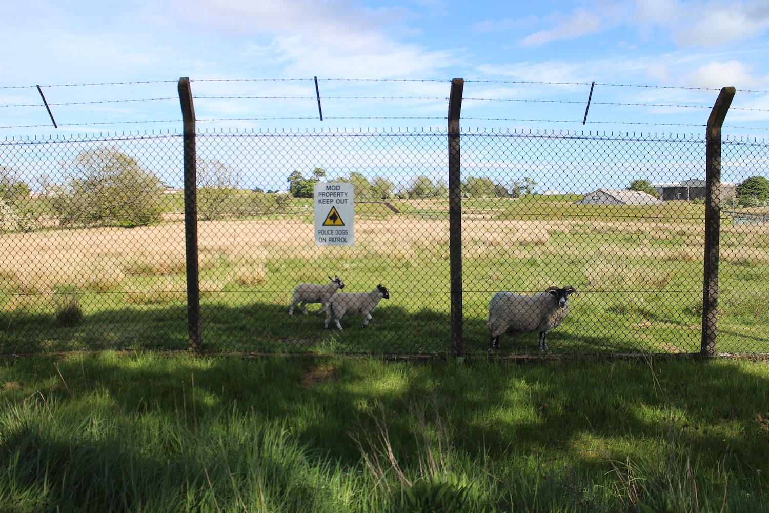 The boundary fence of the defence munitions stores on the edge of Barrmill village.