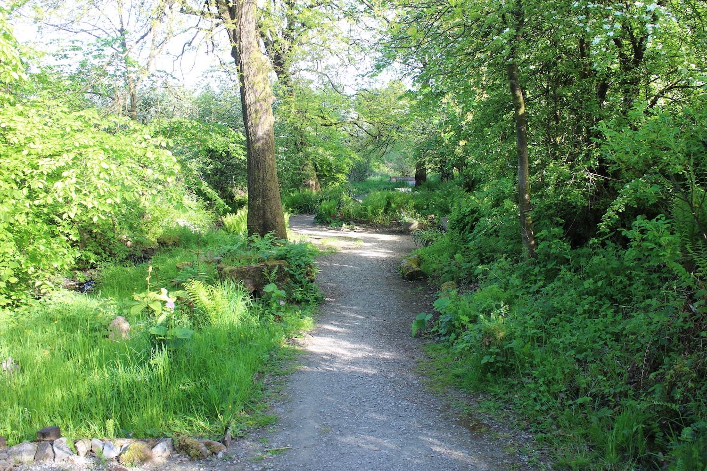 Barrmill forest path