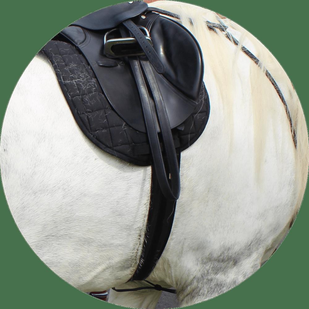 irvine horse icon