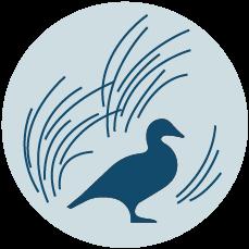 nature rabbit icon